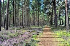 Culbin Forest, Moray, Scotland (photo by Claire Rhind)