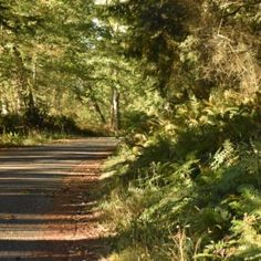 CancerRoadTrip goes to Whidbey Island, through the beautiful Pacific Northwest country side, to oysters, goat cheese, Deception Pass and much more. Deception Pass, Whidbey Island, Pacific Northwest, Road Trip, Country Roads, Beautiful, Road Trips
