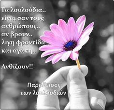 Greek Quotes, Picture Video, Lyrics, Inspirational Quotes, Letters, Feelings, Poster, Pictures, Plant