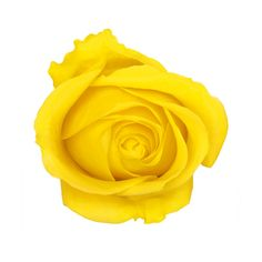 martinique_topview_yellow_rose.png ❤ liked on Polyvore featuring flowers