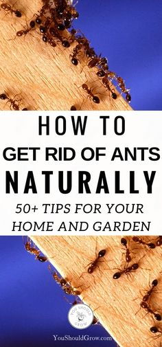 Over 50 great ideas to help you get rid of ants without using harmful chemicals. All-natural DIY recipes to kill ants, kill ant mounds, repel ants, and keep ants out of your home and garden. #Organic #pestcontrol