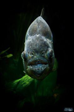 piranha by Frank & Judith Oberle on 500px