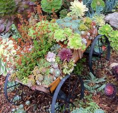 Succulent Wagon!
