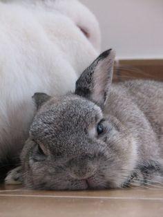Oh, kami mahu seekor arnab comel juga! #cuteanimals
