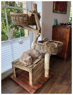 Special designs, your scratching post, also for big cats - natural wood trees . - Einrichtung - Custom-made products, your cat tree, also for big cats – natural wood trees for cats Informations - Diy Cat Tree, Cat Trees, Cat Tree House, Madeira Natural, Cat Shelves, Cat Enclosure, Cat Playground, Cat Room, Wooden Tree