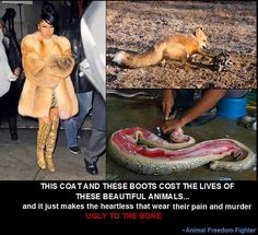 Unless you live in Siberia, you have no reason to wear another animal's fur.