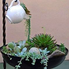 I have really bad luck with most hanging succulents like string of pearls but I love how this looks! Mini jardim com suculentas Like the idea of the spilling of plants into a planter Succulent Gardening, Cacti And Succulents, Planting Succulents, Container Gardening, Planting Flowers, Organic Gardening, Indoor Gardening, Succulent Garden Ideas, Succulent Containers