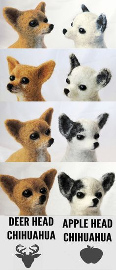 applehead vs deer head chihuahua 1000 ideas about apple head chihuahua on pinterest 9945