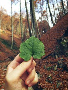 Let's start with green Let It Be, Fruit, Romania, Green, Food, Essen, Meals, Yemek, Eten