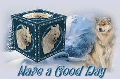 have a good day photo: HaveAGoodDayWolf HaveAGoodDayWolf. Wolf Images, Wolf Pictures, Gifs, Good Day, Good Morning, Wolf Meme, Mr Big, Videos, Wolf Spirit