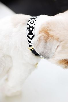 DIY No Sew Dog Collar Sleeves | Pretty Fluffy | Pretty Fluffy - you make a sleeve out of fabric + glue + trim, then can easily slide it on and off your collar to change the look. Fun and easy DIY gift idea!
