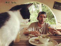 Reposting @1way.ticket: When Mr. Whiskers 🐱is trying to jack your 🥑 toast #hostellife . . . . .  #cats #catsofinstagram #cat #catstagram #instacat #kitty #kitten #meow #kittens #catoftheday #catlove #catlife #hostel #fincacarpediem #pasodelmango #santamarta #colombia #minca