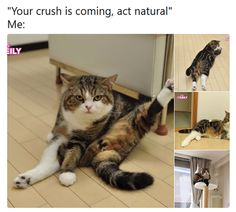 Fresh Animal Memes That Will Make You Laugh Out Loud - 4