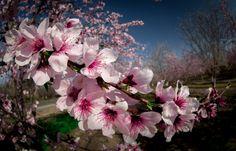 Spring's Glory by Vassili Broutski on 500px