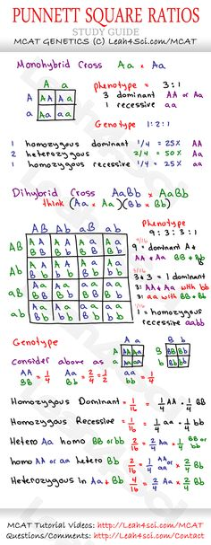 Punnet-Square-Ratios-MCAT-Genetics-Cheat-Sheet-Study-Guide.jpg 1,069×2,750 pixels