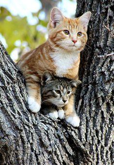 树杈上的两只小猫