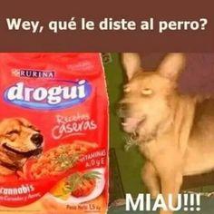 - picture for you Funny Spanish Memes, Stupid Funny Memes, Mexican Memes, Pinterest Memes, Quality Memes, New Memes, Otaku Anime, Meme Faces, Marvel Memes