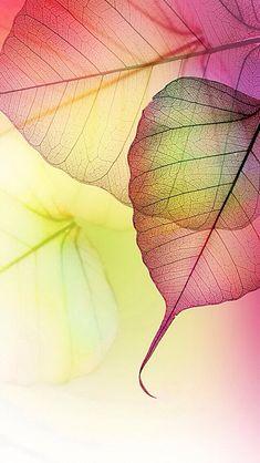 Fall-The delicate gifts. http://media-cache-ec0.pinimg.com/originals/67/d1/f7/67d1f7edeb4c687a989a4dfd014426c6.jpg