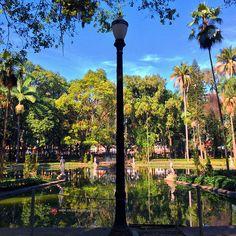 Jardim da Luz, em São Paulo, estado de São Paulo, Brasil.