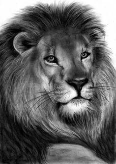 Lion Drawing by Danguole Serstinskaja - Lion Fine Art Prints and ...