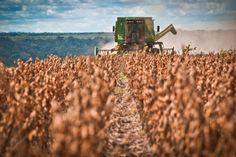 IBGE estima crescimento de 2,3% da safra em relação a 2013 | #Agricultura, #Alimentos, #Ibge, #NielmarDeOliveira, #Safra