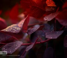 Autumn creeps in by ivorberry #fadighanemmd