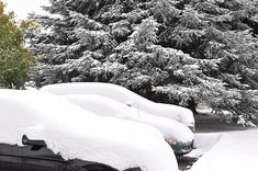 We had the first significant snow of the season over the weekend in Northern Colorado. How much snow fell in Northern Colorado? Plus Todd's wife got great photos. How Much Snow, Fort Collins, Great Photos, Colorado, Seasons, Pictures, Outdoor, Photos, Outdoors