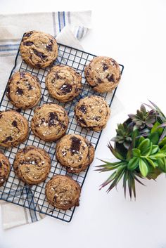 Sea Salted Olive Oil Chocolate Chip Cookies - Broma Bakery