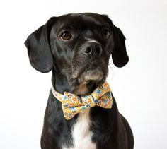 Spring Floral Dog Bow Tie Collar by SillyBuddy on Etsy, $42.00