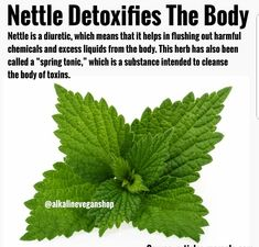 Nettle is best collected in spring when it has most nutrients. Salad, tea or soup provide the body with lots of antioxidants. Nettle cobtains lots of vitamin C so is good for strengthening the immunity. Natural Health Remedies, Natural Cures, Natural Healing, Herbal Remedies, Flu Remedies, Health Heal, Health And Nutrition, Health And Wellness, Healing Herbs