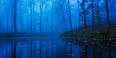 Lotheriel's Elven Realm - magic-spelldust:   beautiful foggy forests by Leif...