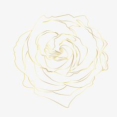 Rose Gold Line, Line, Rose Lines, Golden PNG Image