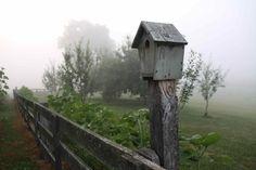 blue bird house in early morning spring fog, on the farm
