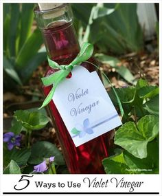 Homemade Violet Vinegar & Five Ways to Use It