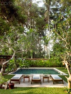 A Swimming Pool With Lounge Chairs Beneath The Beautiful Tropical Trees. A Swimming Pool With Lounge Chairs Beneath The Beautiful Tropical Trees. Backyard Pool Designs, Small Backyard Pools, Small Pools, Swimming Pools Backyard, Swimming Pool Designs, Backyard Landscaping, Outdoor Rooms, Outdoor Living, Kleiner Pool Design