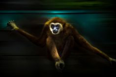 MONKEY GIBBON by Chantal Cecchetti