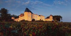 Il n'y aura pas d'Yquem 2012, en raison d'une vendange décevante et de l'exigence gustative du Château.