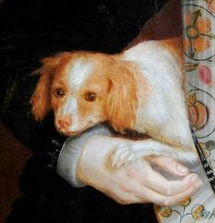 """Pourquoi was Anne Boleyn's lapdog.Pourquoi was given to Anne by Honor, Lady Lisle. Honor was a very ambitious woman who strove to advance her family by cultivating a close relationship with the queen.Sadly, Pourquoi died in December, 1534. Margery Horseman, one of Anne's ladies, wrote to the Lisles that the dog had """"fallen from a window"""" and her ladies were so afraid of Anne's reaction, they asked the king to break the news to her. It doesn't appear Anne ever replaced Pourquoi."""