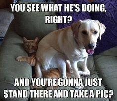 25 Funny Dog Memes: Part 3 - Dogtime
