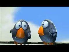 Leuk kort vogel filmpje