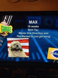 """1D Updates Dupdategirls   """"@Jane potter Posts: ON THE PUPPY BOWL I CANT STOP LAUGHING"""