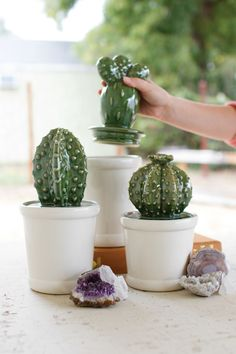 "Store your favorite keepsakes or other goodies with this set of canisters. With cactus lids and white flower pot bottoms, these ceramic succulents will flourish on your bookshelf or kitchen counter top. largest 5½""d x 12½""t"