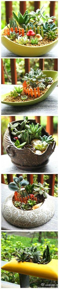 Pequeñas Plantas Suculentas bonsái ~ ~ cute