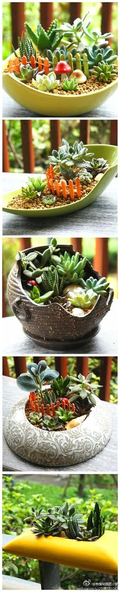 Mini jardins de suculentas - Pretty mini gardens