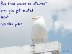 You know you're an introvert...
