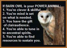 animal spirit guide barn owl