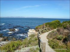 Hermanus is a popular seaside town in South Africa on the famous whale coast route, close to Cape Town. Hermanus, best whale watching in the world South Africa Beach, Shark Cage, Coast Hotels, Adventure Activities, Seaside Towns, Green Mountain, Whale Watching, Heritage Site, Paths