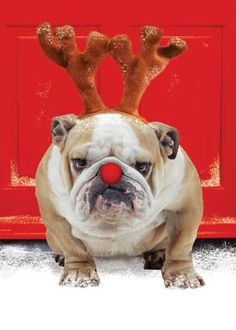 I ain't no Rudolf!