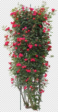 n cây hoa photoshop