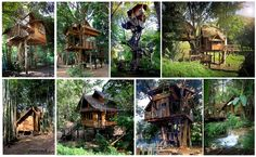 The most incredible Tree house hotel and Eco-tourism tree resorts all around the world and for all budgets. Experience nature and Ecotourism within a tree!